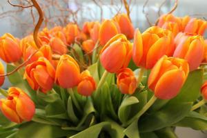 Tulipanes por todos lados esta semana en el Aeropuerto de Ginebra - Foto de Geneve Aeroport